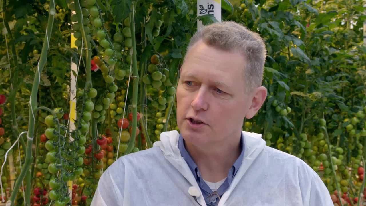 Hoeveel tomaten kunnen er uit 1 zaadje geteeld worden?